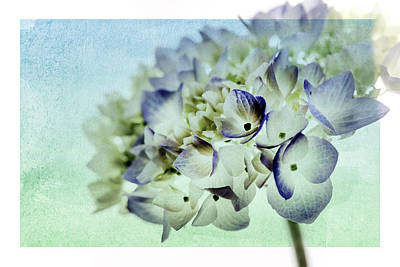 Photograph - Hydrengae Petals 2 by Rebecca Cozart