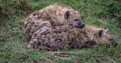 Photograph - Hyena Buddies by Tim Bryan