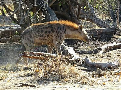 Photograph - Hyena  by Jennifer Wheatley Wolf