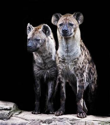 Hyena Photograph - Hyenas by Martin Newman