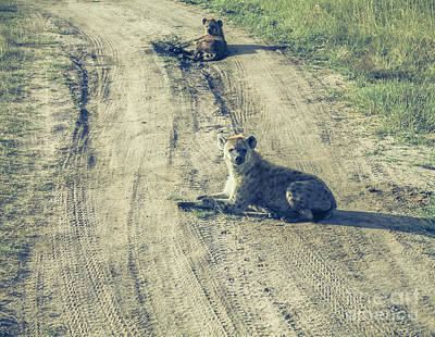 Photograph - Hyenas Staring At The Camera by Claudia M Photography