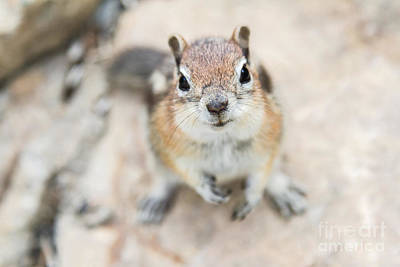 Photograph - Hypno Squirrel by Chris Scroggins
