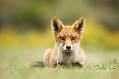 Intimate Photograph - Hypnofox by Roeselien Raimond