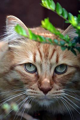 Orange Tabby Photograph - Hypnotic by Fraida Gutovich