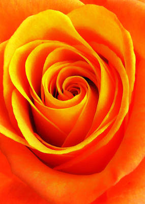 Photograph - Hypnotic Orange by Nathan Little