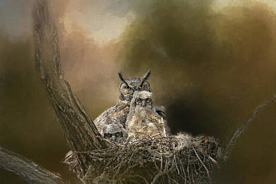 Owlets Photograph - Hypnotized by Donna Kennedy