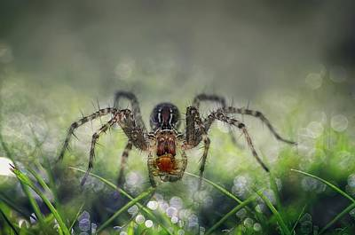 Spider Photograph - I Am Back To You by Erwin Astro