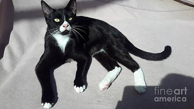 I Am Ceasar. Photo Of Black White Kitten Art Print