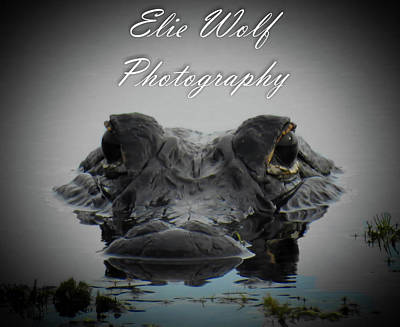 Photograph - I Am Gator, No. 100 by Elie Wolf