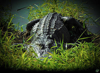 Photograph - I Am Gator, No. 101 by Elie Wolf