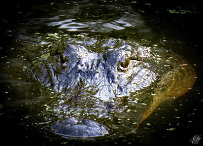 Photograph - I Am Gator, No. 103 by Elie Wolf