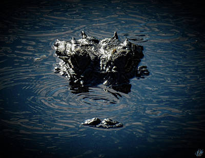 Photograph - I Am Gator, No. 104 by Elie Wolf