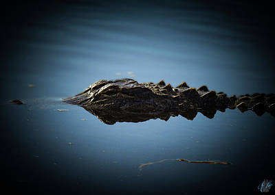 Photograph - I Am Gator, No. 116 by Elie Wolf