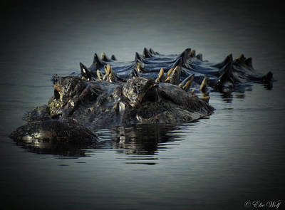 Photograph - I Am Gator, No. 45 by Elie Wolf