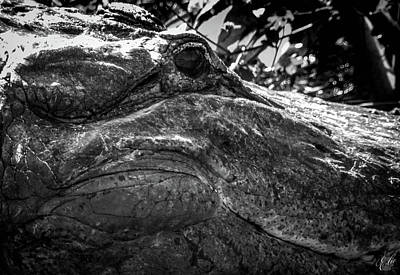 Photograph - I Am Gator, No. 73 by Elie Wolf