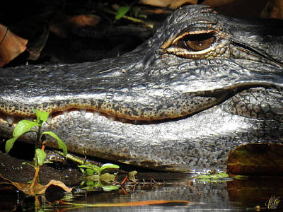 Photograph - I Am Gator, No. 76 by Elie Wolf