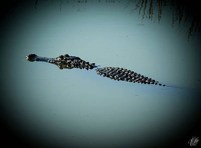 Photograph - I Am Gator, No. 78 by Elie Wolf