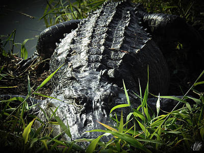 Photograph - I Am Gator, No. 80 by Elie Wolf