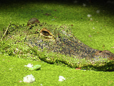 Photograph - I Am Gator, No. 82 by Elie Wolf