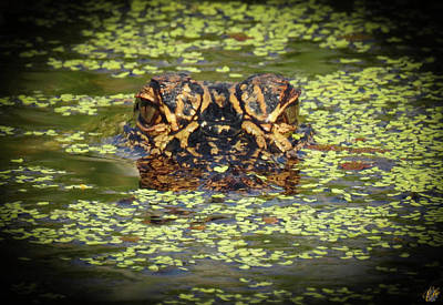 Photograph - I Am Gator, No. 87 by Elie Wolf