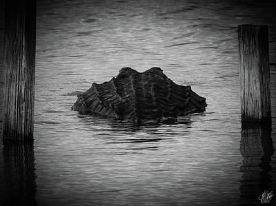 Photograph - I Am Gator, No. 88 by Elie Wolf