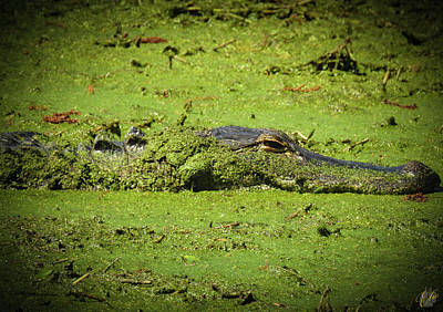 Photograph - I Am Gator, No. 91 by Elie Wolf
