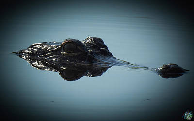 Photograph - I Am Gator, No. 96  by Elie Wolf