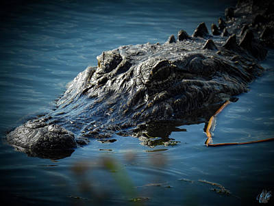 Photograph - I Am Gator, No. 97 by Elie Wolf