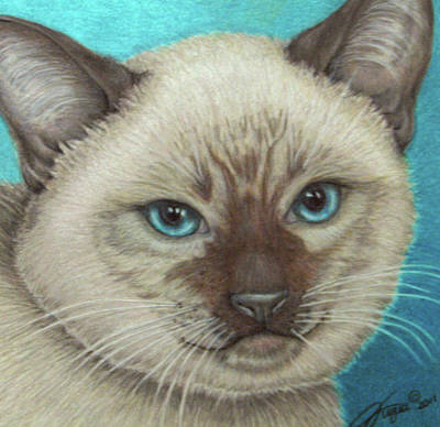 Fuqua - Artwork Drawing - I Am Siamese If You Please by Beverly Fuqua