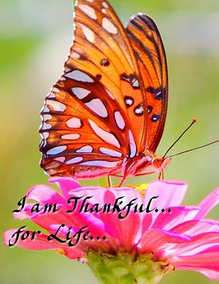 Photograph - I Am Thankful For Life by Virginia Kay White
