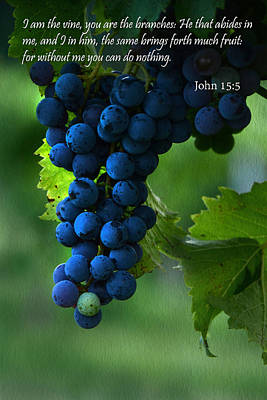 Grapevine Photograph - I Am The Vine by Ann Bridges