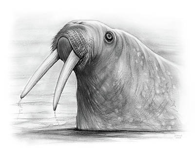 Drawings - I am the Walrus by Greg Joens