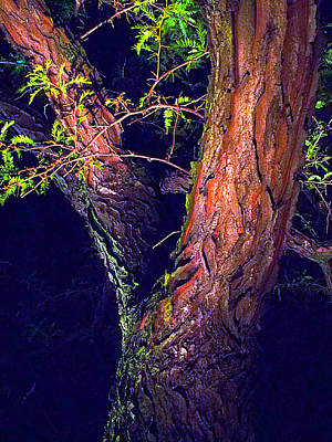 Photograph - I Am Tree by Guy Ricketts