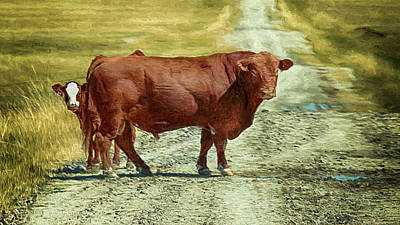 Photograph - I Call Bull by Susan Rissi Tregoning