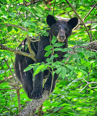 Photograph - I Can Bearly See You by Bernadette Chiaramonte