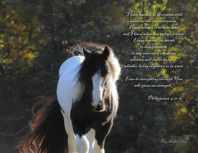 Gypsy Vanner Horse Photograph - I Can Do All Things by Terry Kirkland Cook