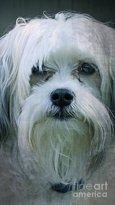 Pups Digital Art - I Can Explain - Dog Mania Print by Ella Kaye Dickey