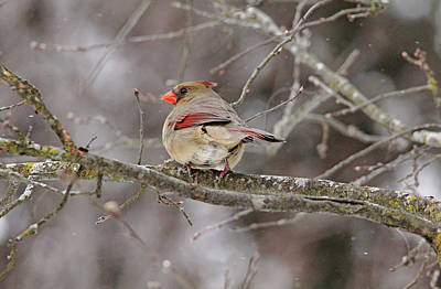 Photograph - I Can Hear You by Debbie Oppermann