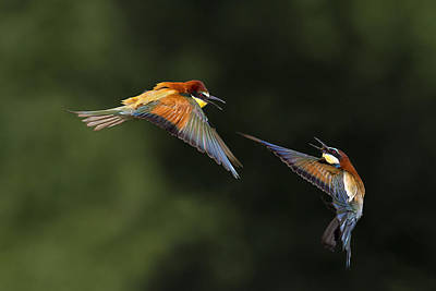 Flight Photograph - I Do Not Want You by Marco Redaelli