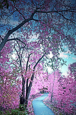 Photograph - I Dream In Pink 2 by Tara Turner