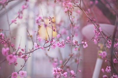 Photograph - I Dream Of Blossoms by Kunal Mehra