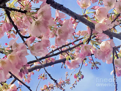 Photograph - I Dream Of Cherry Blossoms by Victor K