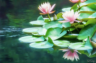 Photograph - I Dream Of Water Lilies by Dee Browning