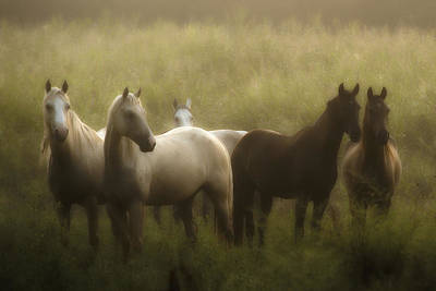 I Dreamed Of Horses Art Print by Ron  McGinnis