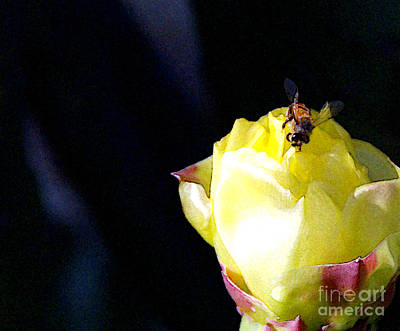 Prickly Rose Photograph - I Feel You Always Near by Linda Shafer
