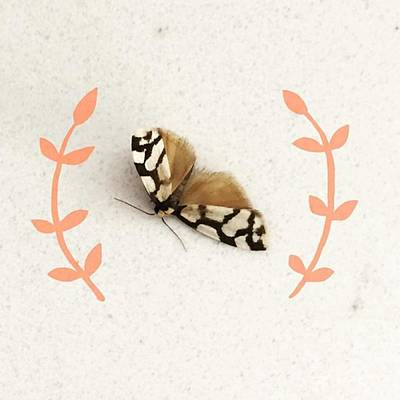 Artist Wall Art - Photograph - I Found This Pretty Little Moth On My by Jaz Higgins