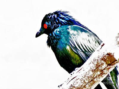 Parakeet Mixed Media - I Got My Eye On You by Slade Roberts