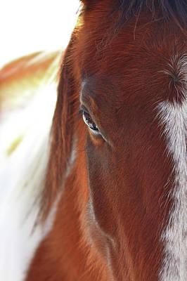 Animals Photos - I Got My Eyes On You by Evelina Kremsdorf
