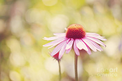 Bloosom Photograph - I Got Sunshine by Beve Brown-Clark Photography