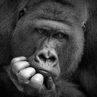 Gorillas Photograph - I Had A Dream .... by Antje Wenner